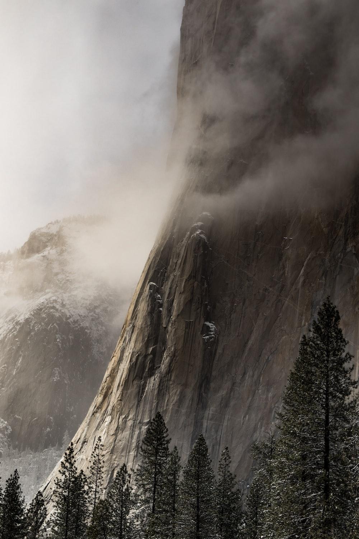 pine trees near mountain with fogs