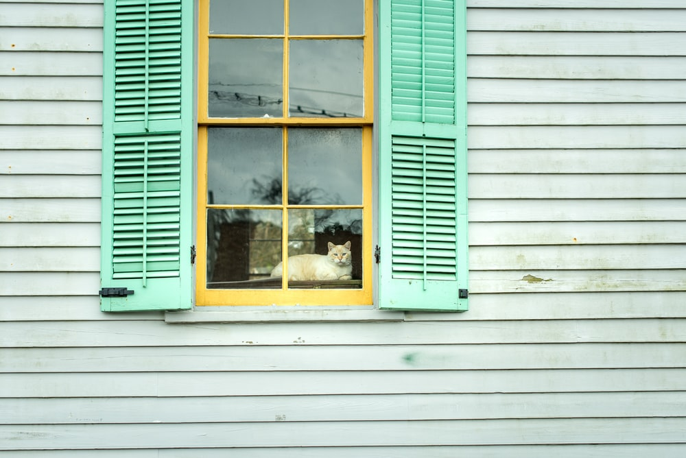 yellow wooden window with green window covers