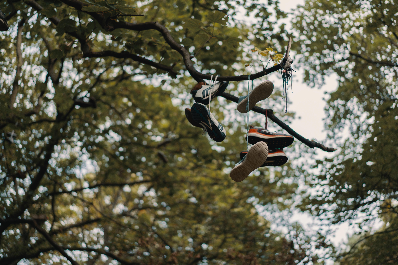 macro shot photography of shoes on tree