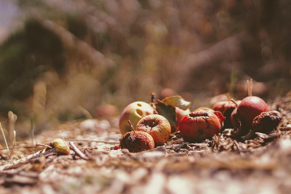 dried fruits