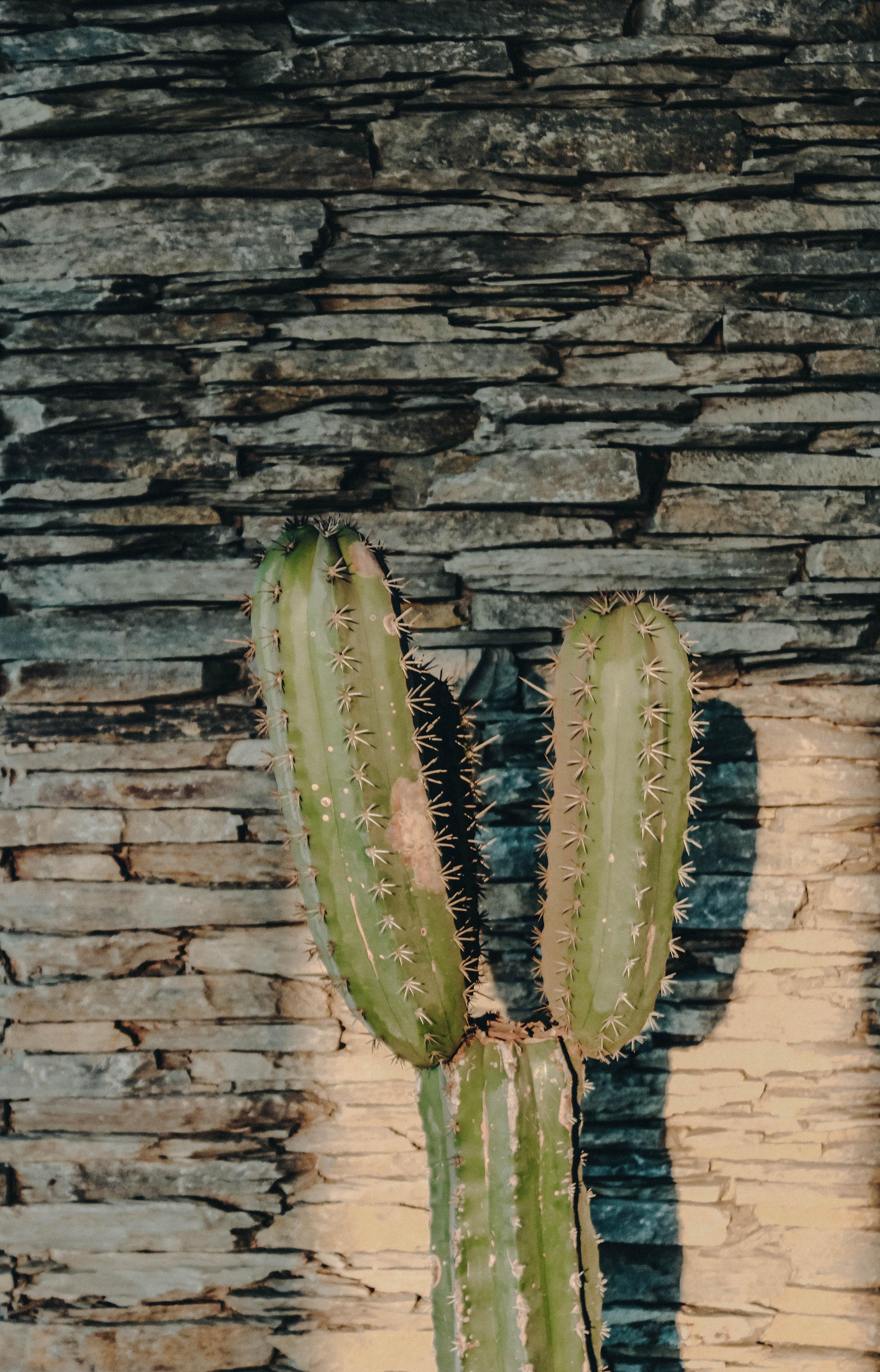 cactus plant near wall