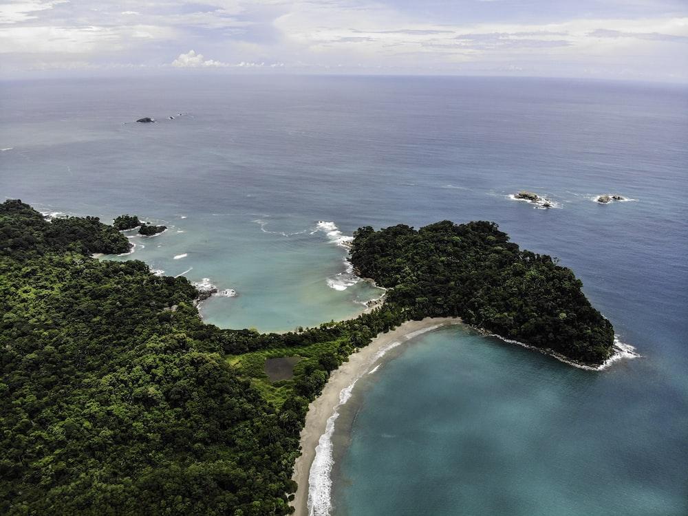 green trees beside blue sea