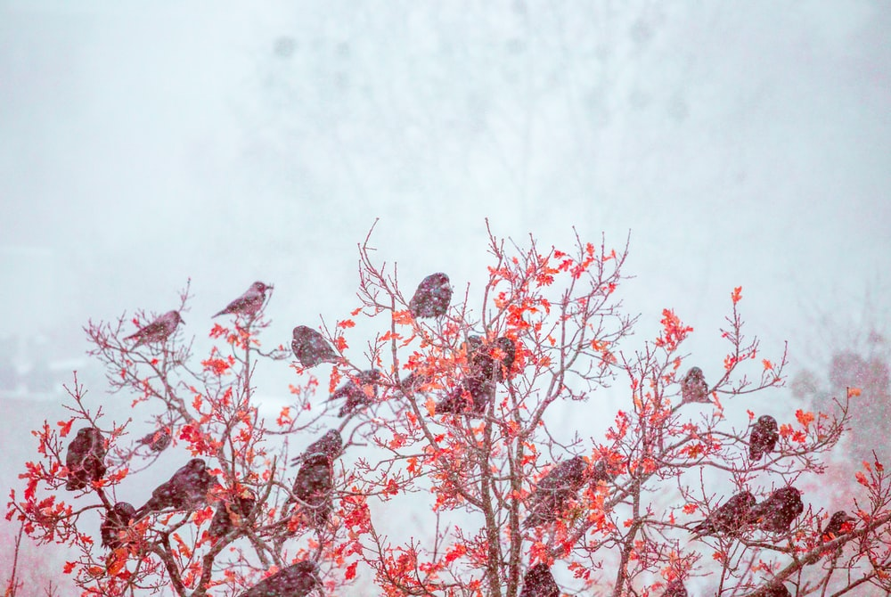 birds perched on red leafed tree branches