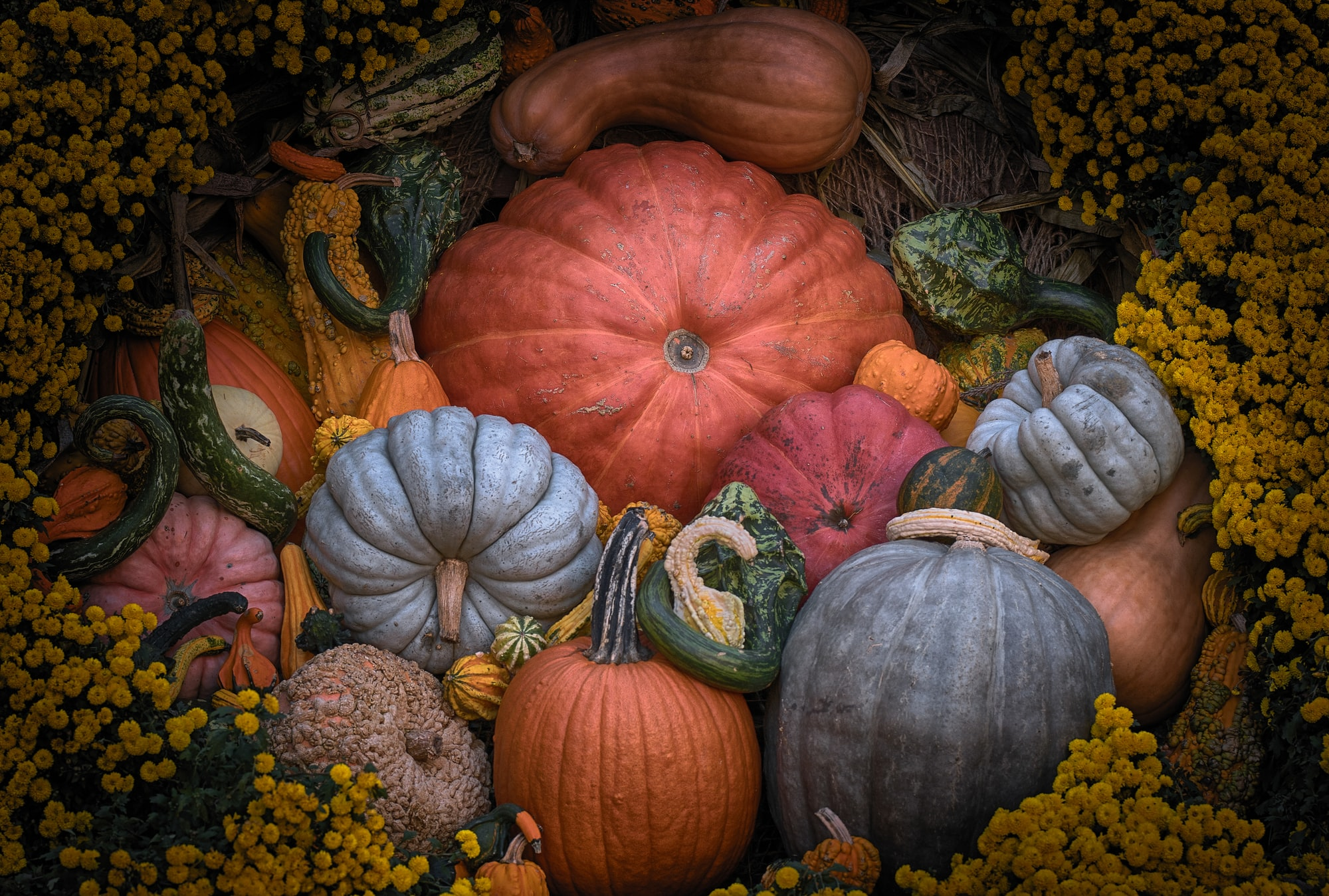Pumpkin Menagarie