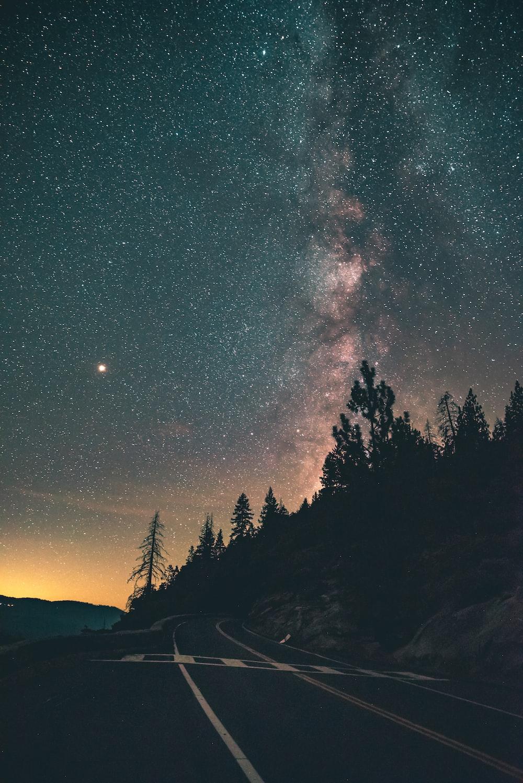 trees under starry night