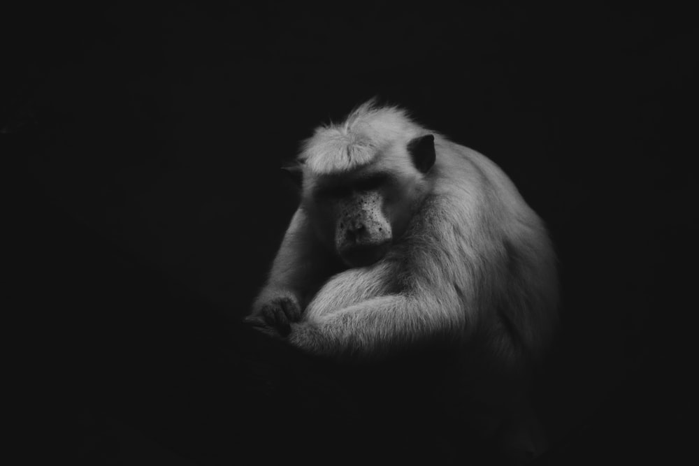 grayscale photo of baboon