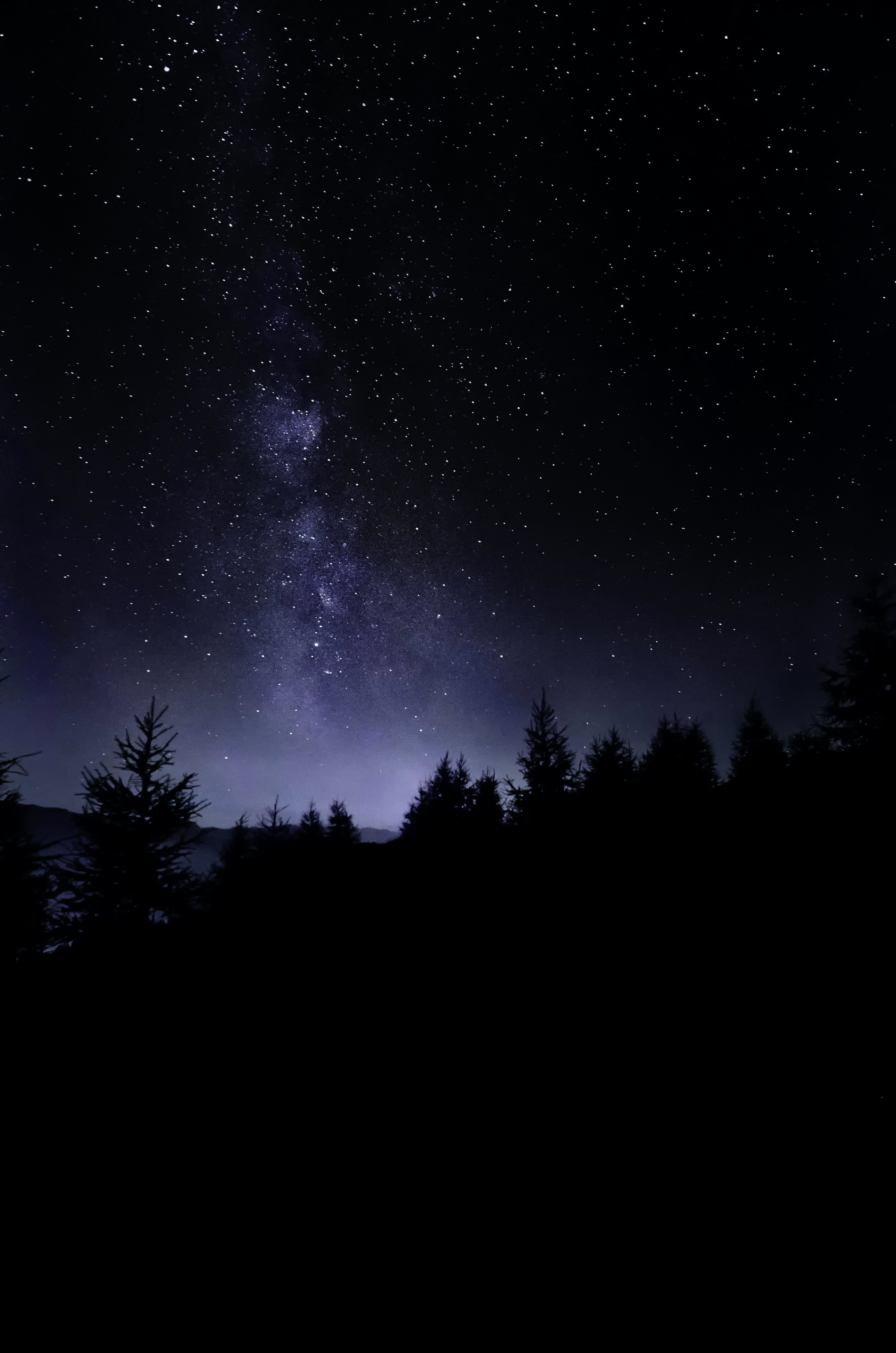 pine trees under starry sky