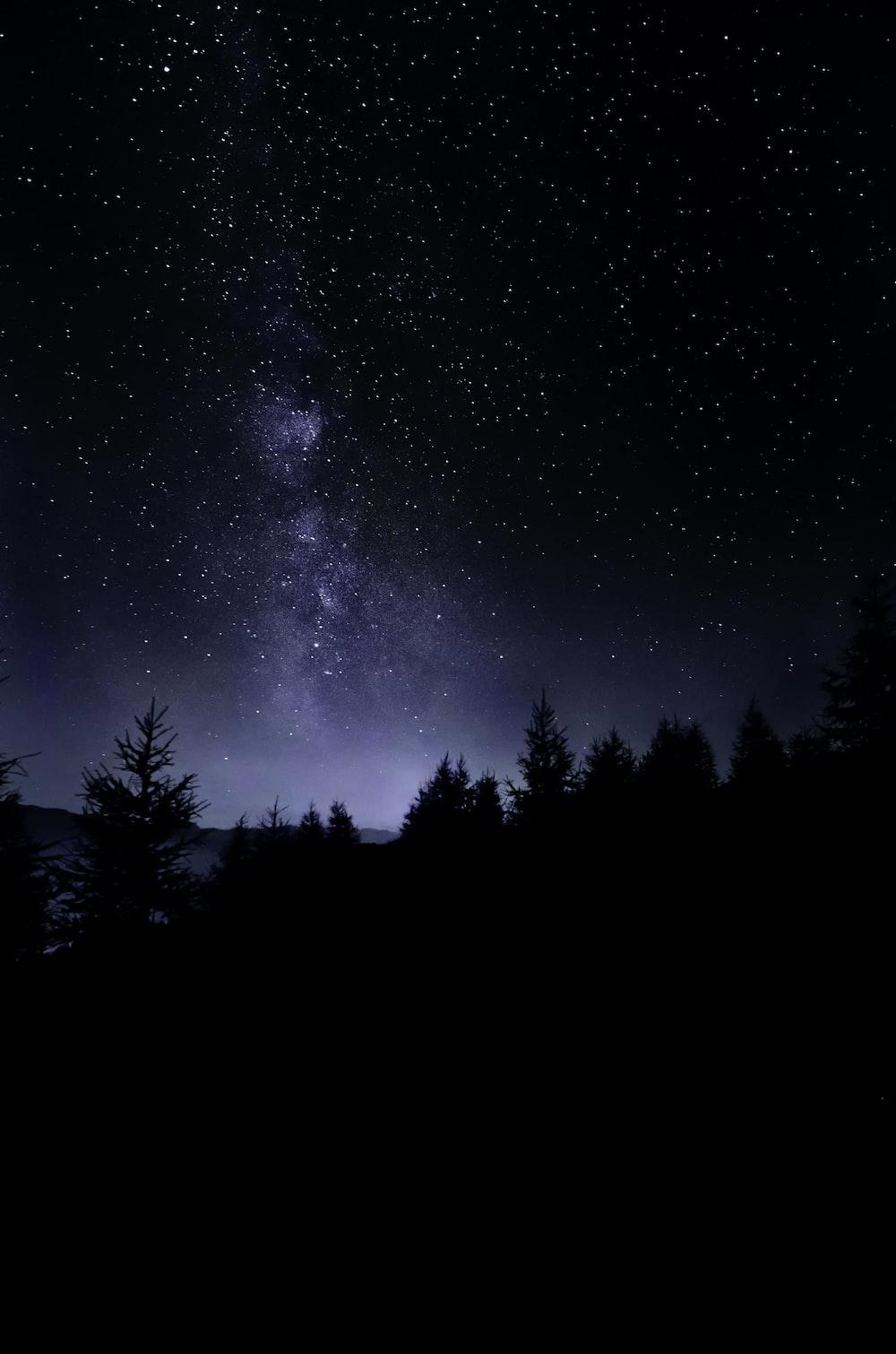 pine trees under starry sky