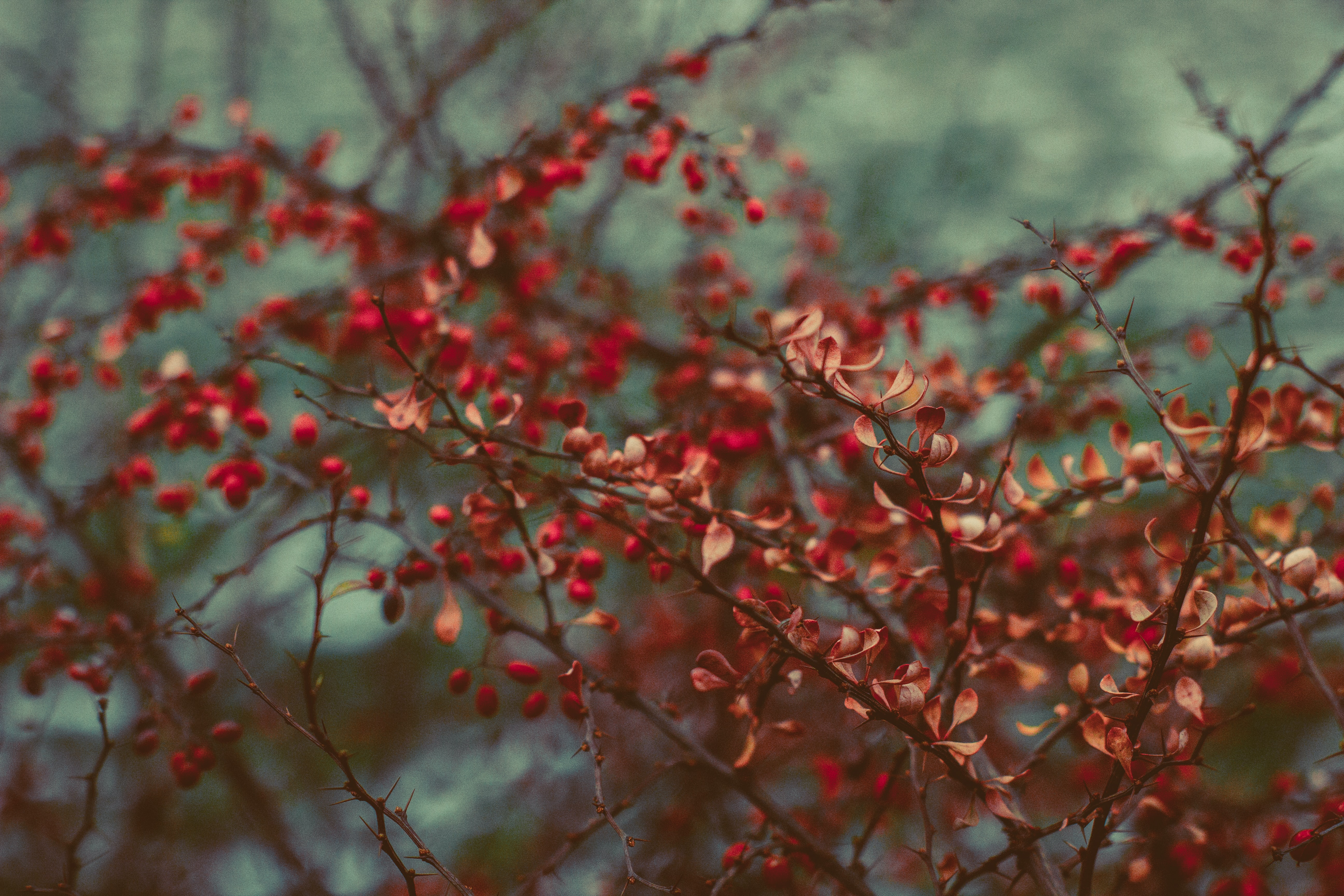 red leafed trees in selective focus photography