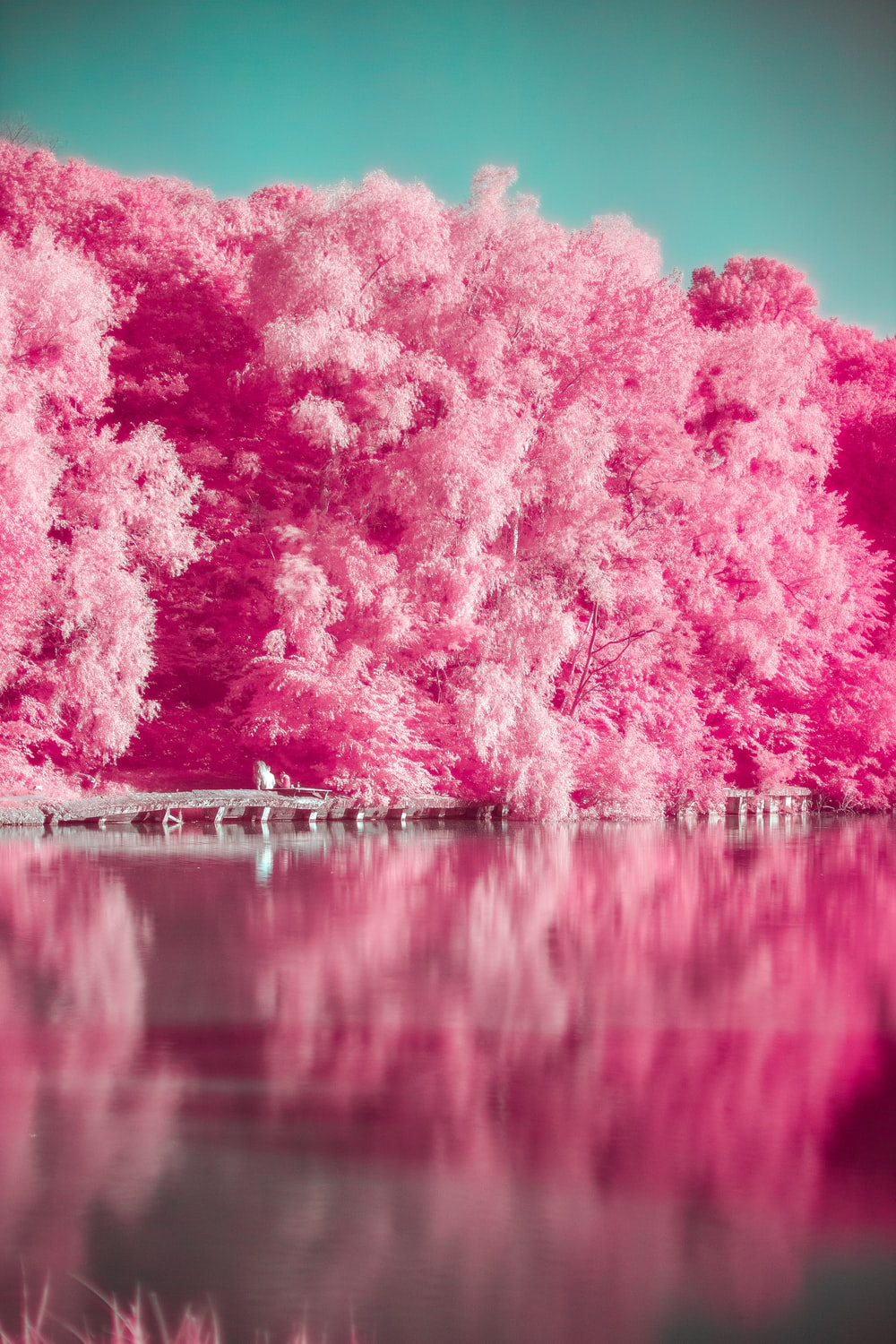 pink trees beside body of water during daytime