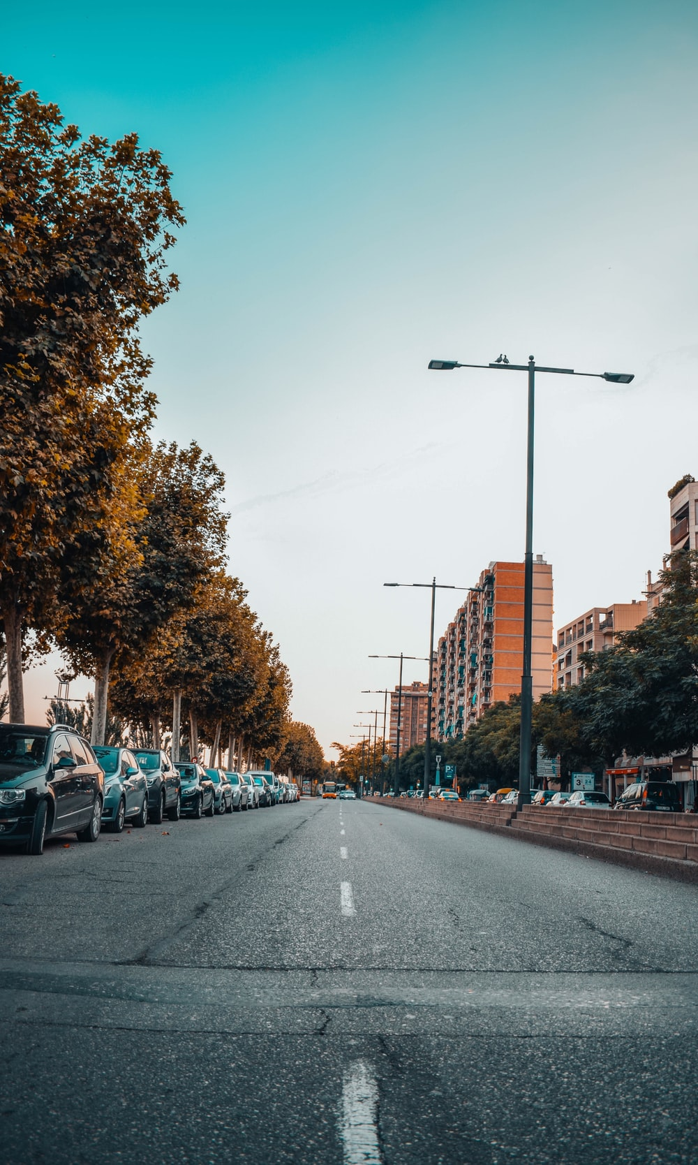 trees and building between asphalt road