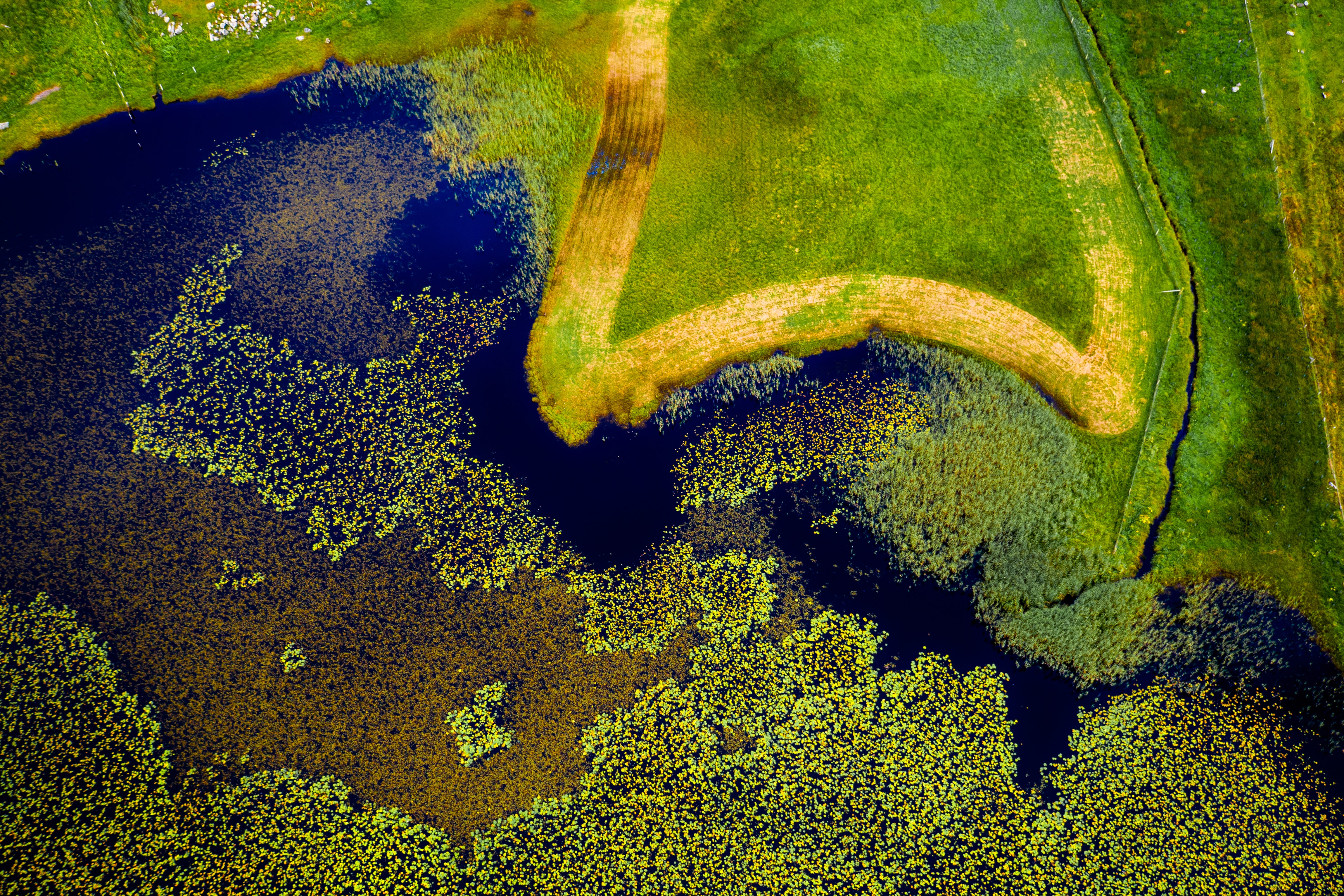 closeup photography of green moss on body of water