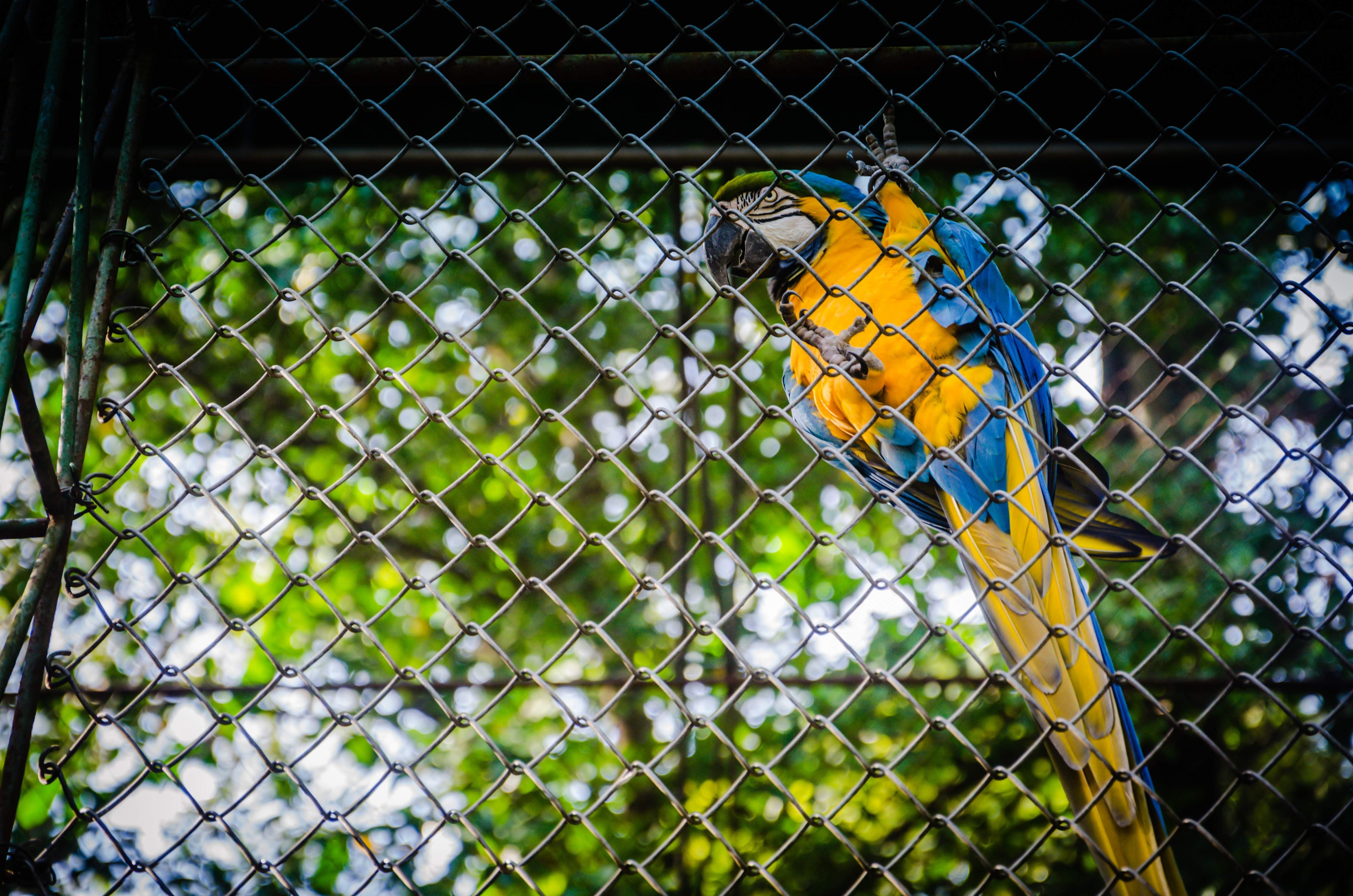 yellow, green, and blue parrot