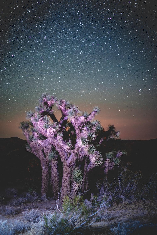 pink tree on dessert at night time