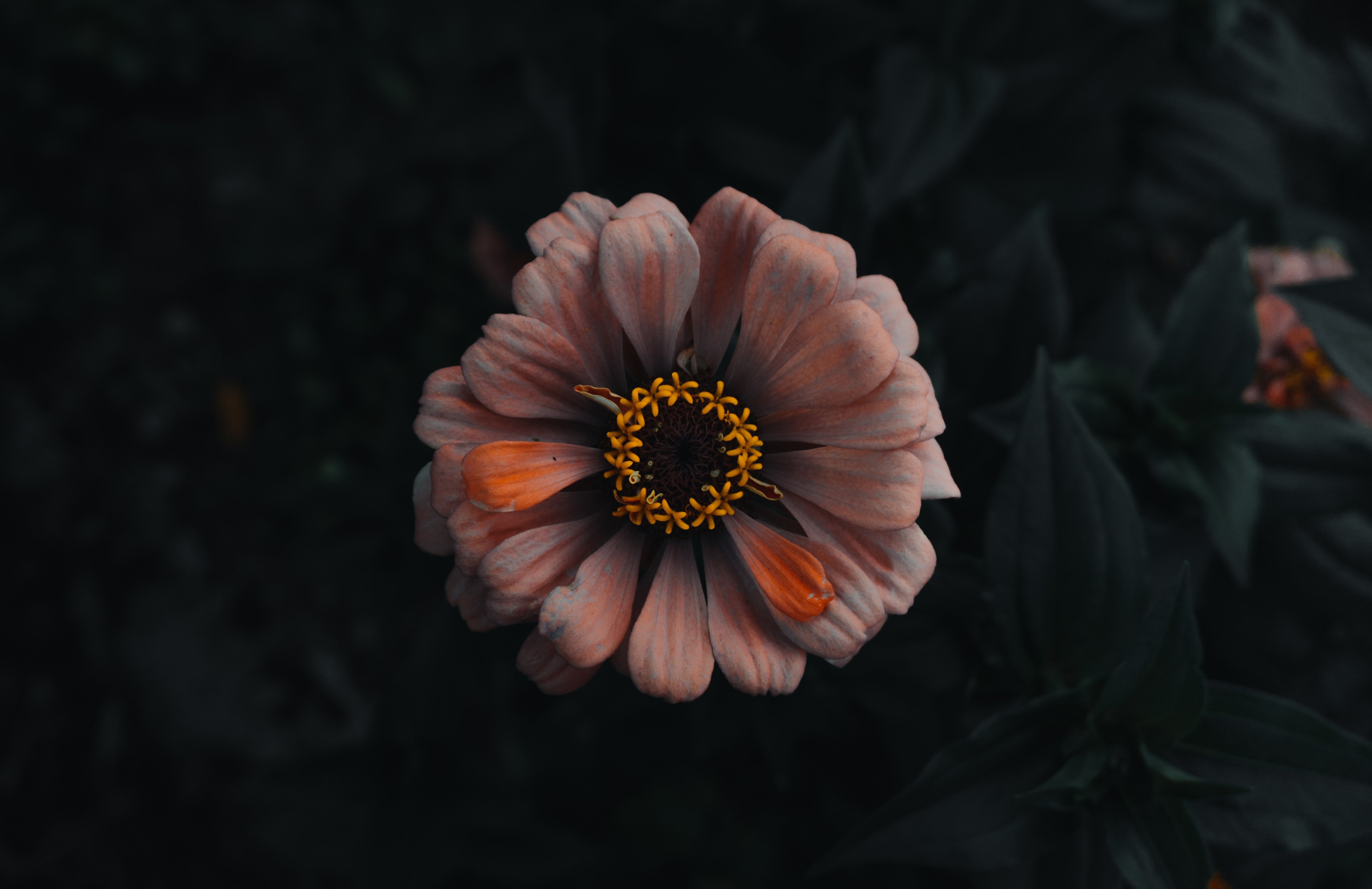 orange and white petaled flower