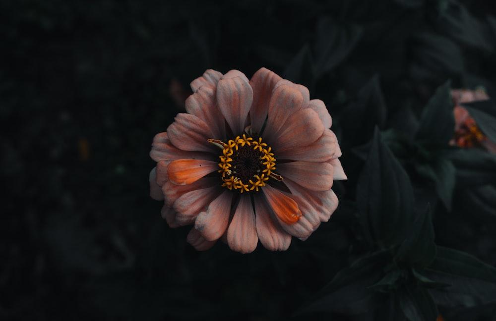 orange and white petaled flower