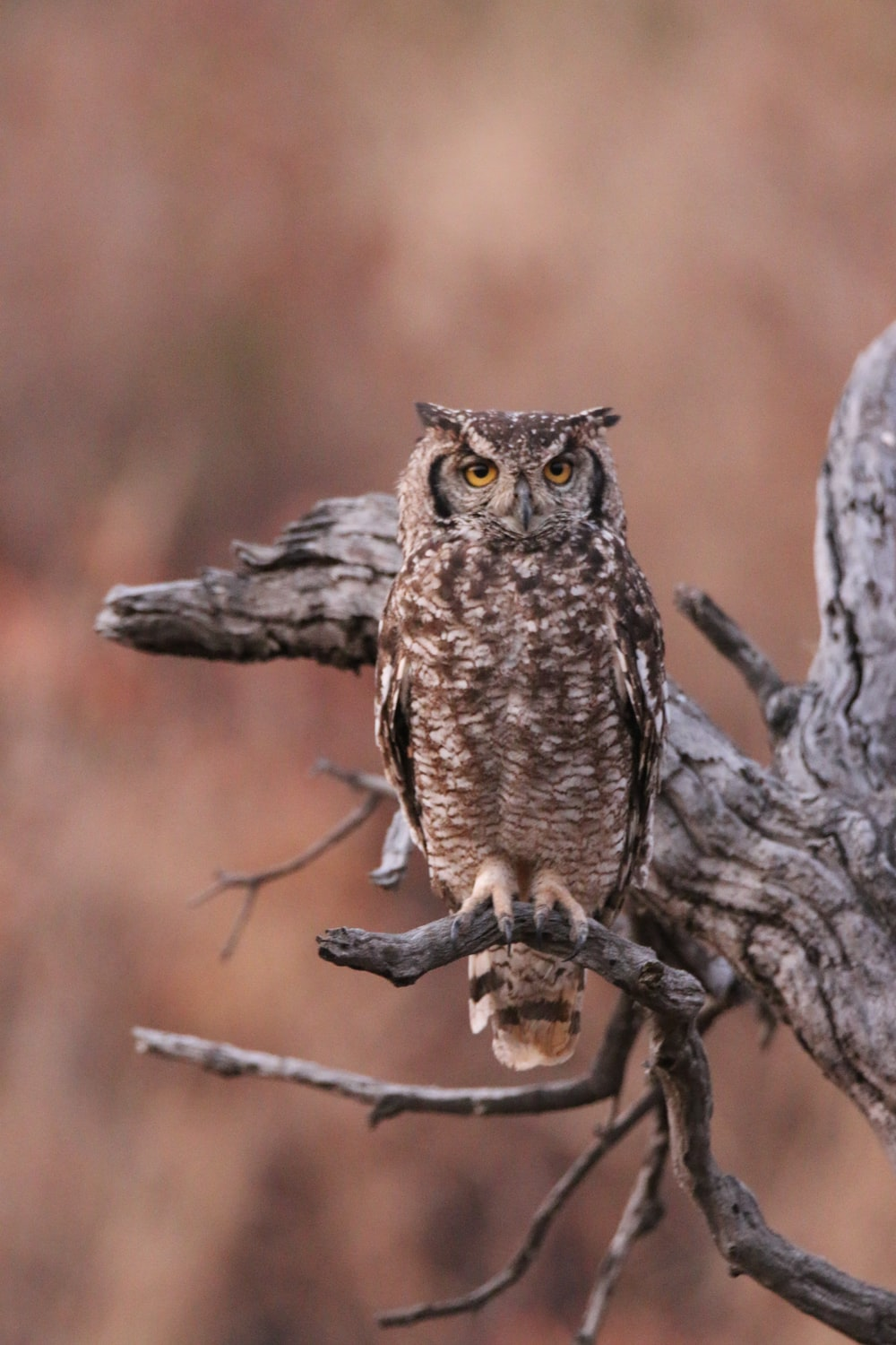 brown owl perching on branch