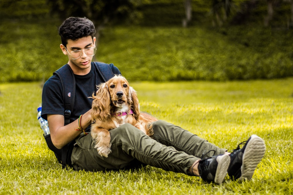 man petting long-coated brown dog while sitting on green grass covered ground during day time
