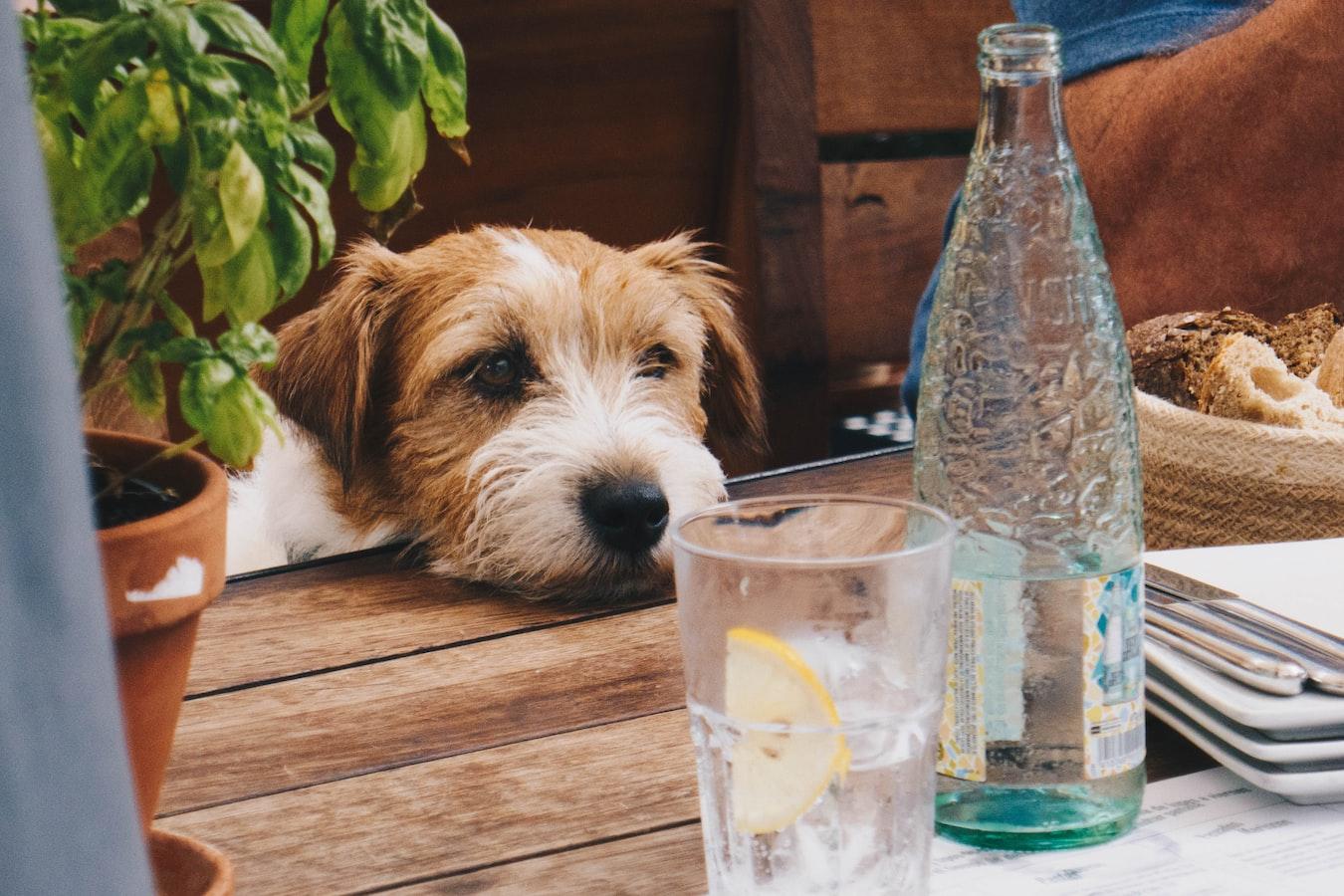 L'acqua: il nutriente dimenticato
