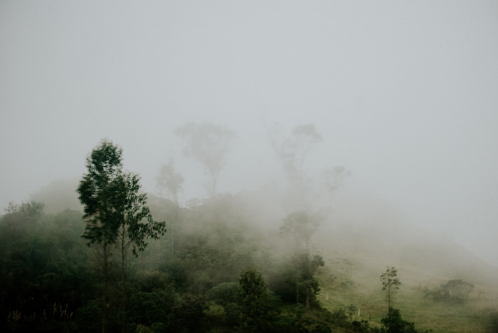 forest covered with fogs