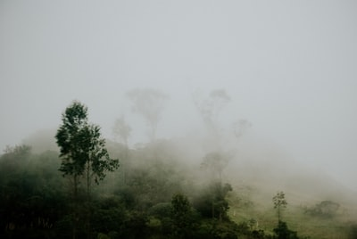 forest covered with fogs honduras teams background