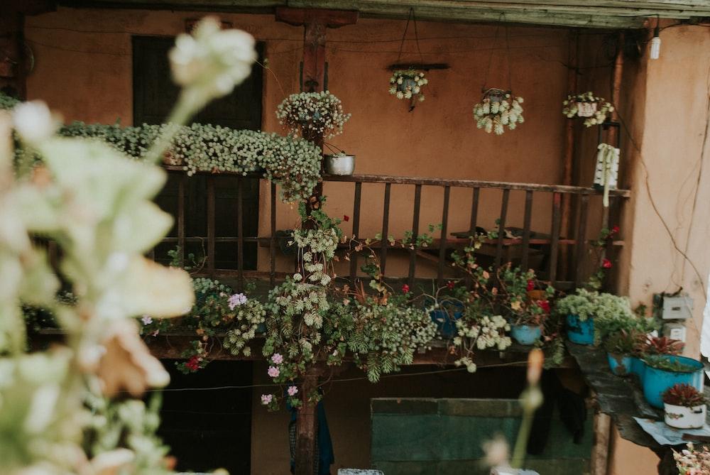 white-flowering plant on balustrade