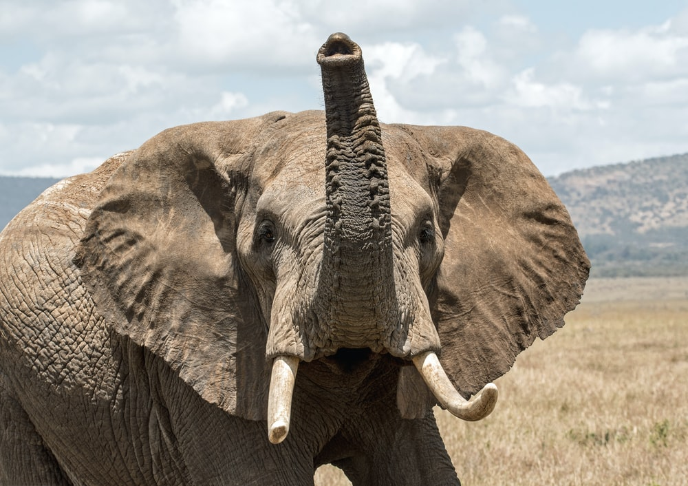 elephant on grass field