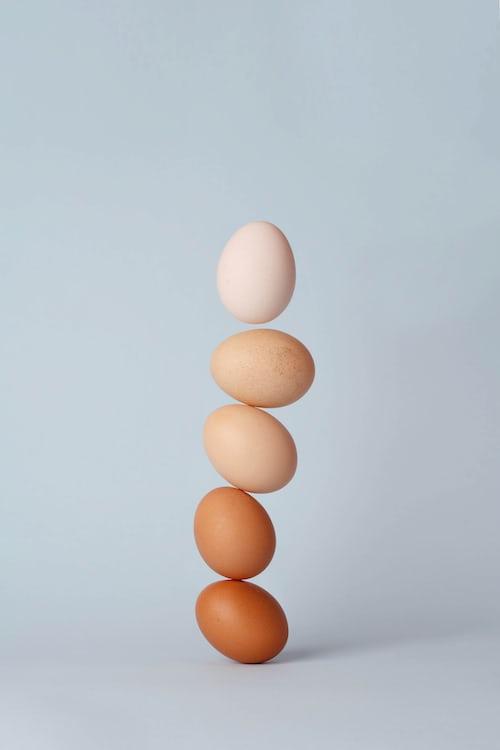 Distributor Telur Termurah dan Khasiat Dari Telur