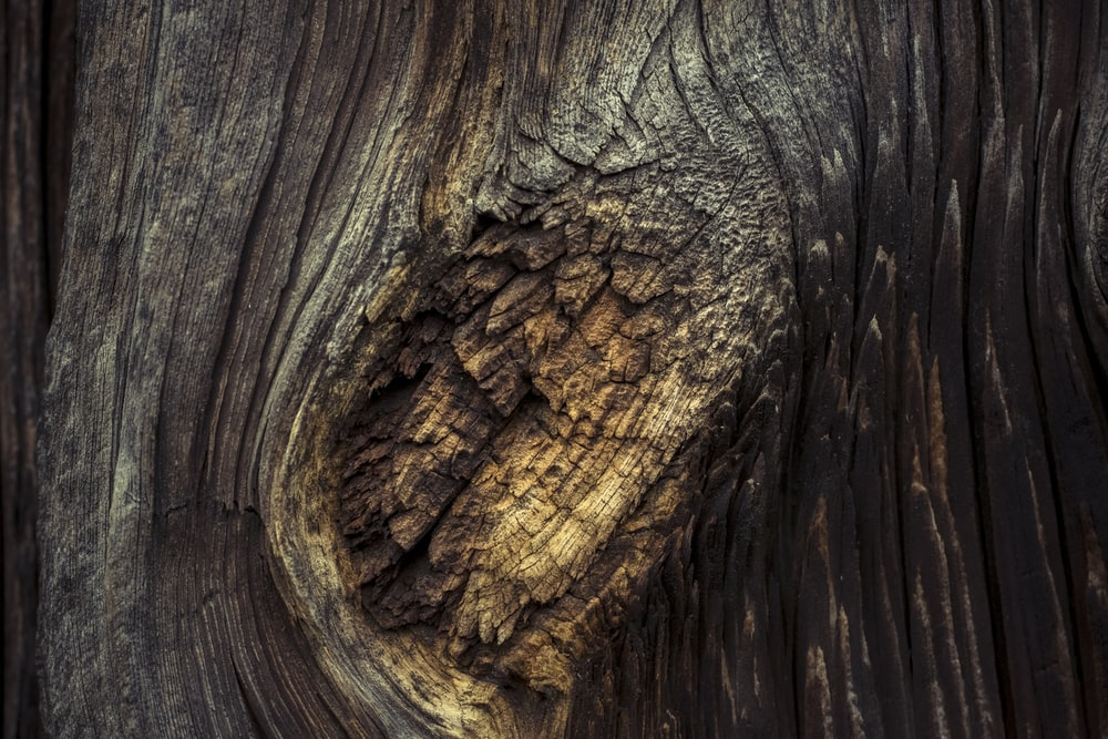 brown and black tree trunk illustration