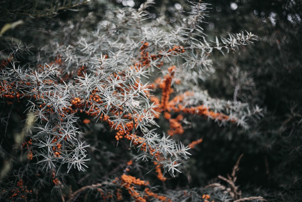 selective focus photography of white and orange plant