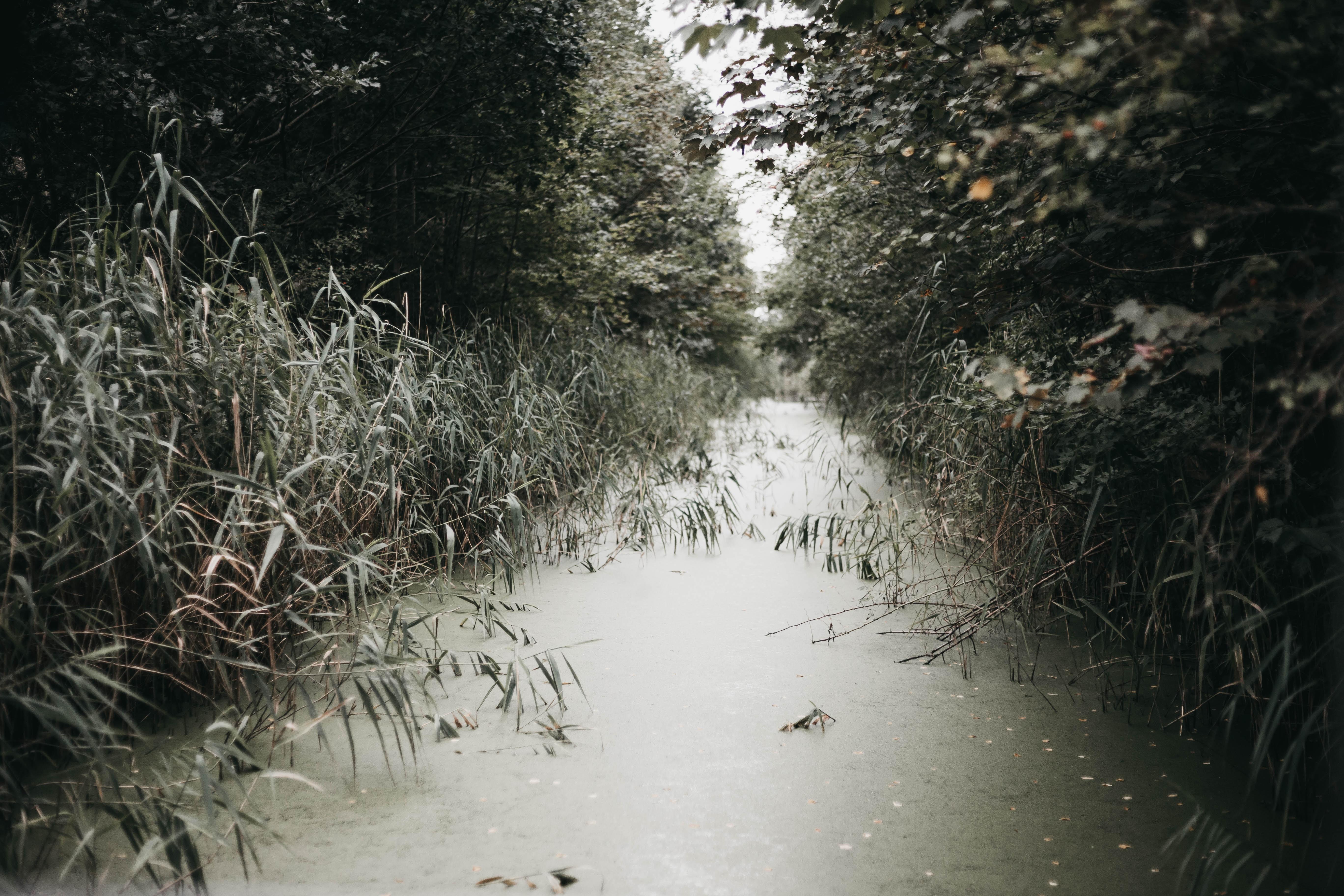creek between green grass