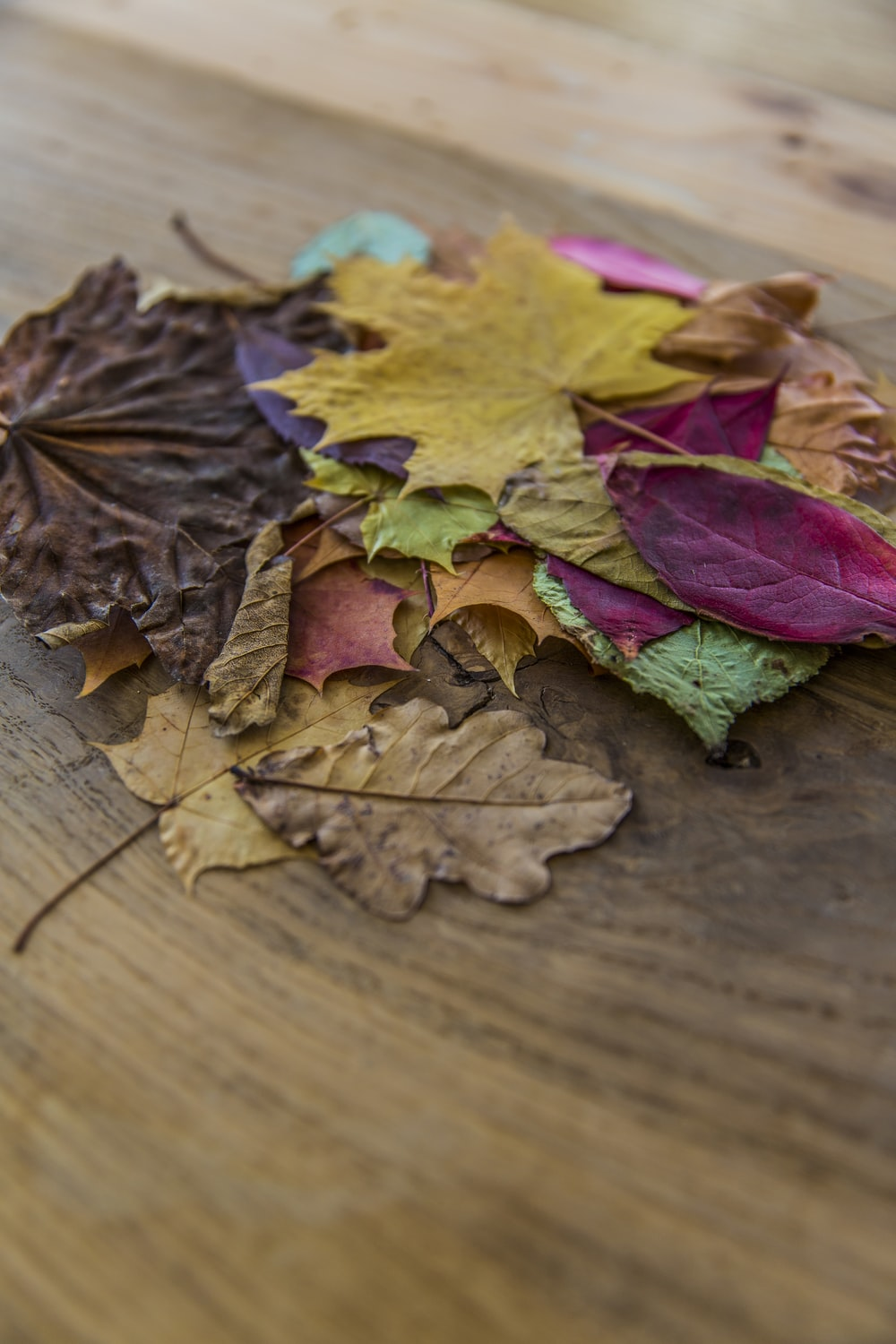 assorted-color leaves on brown surface