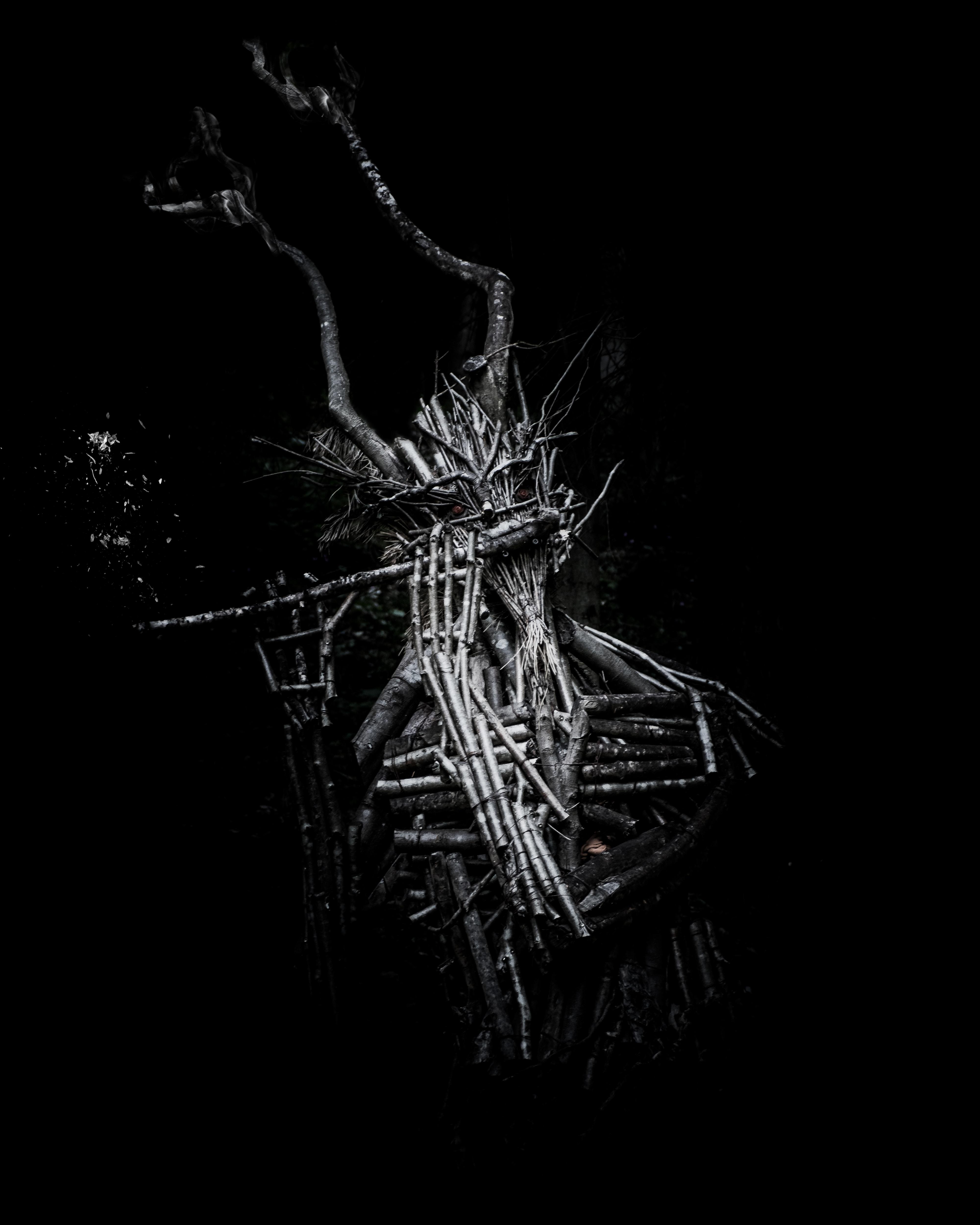 black driftwood illustration