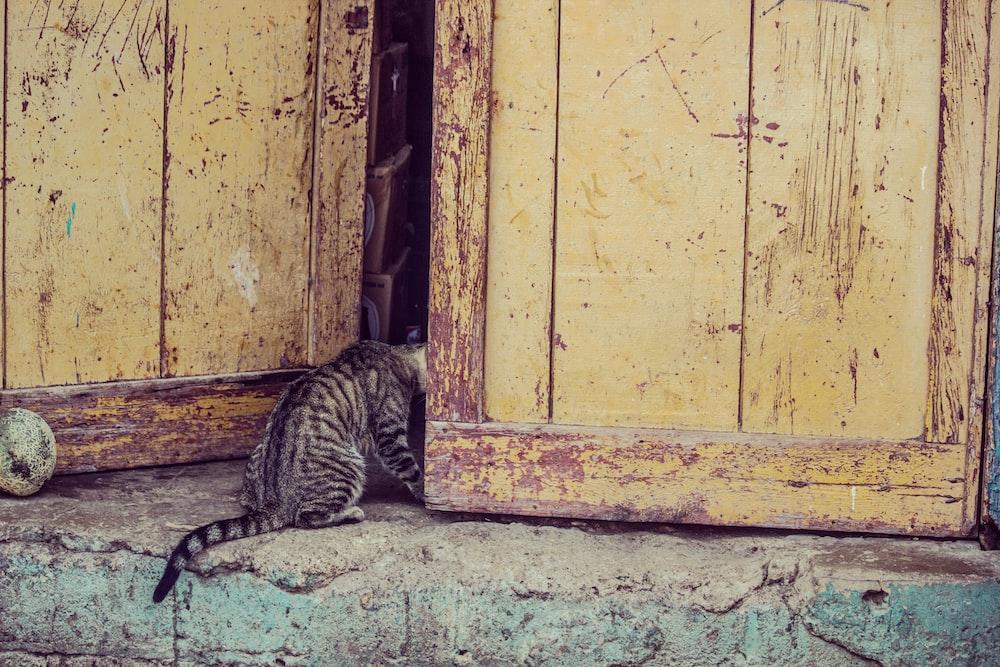 photo tabby cat sitting beside door