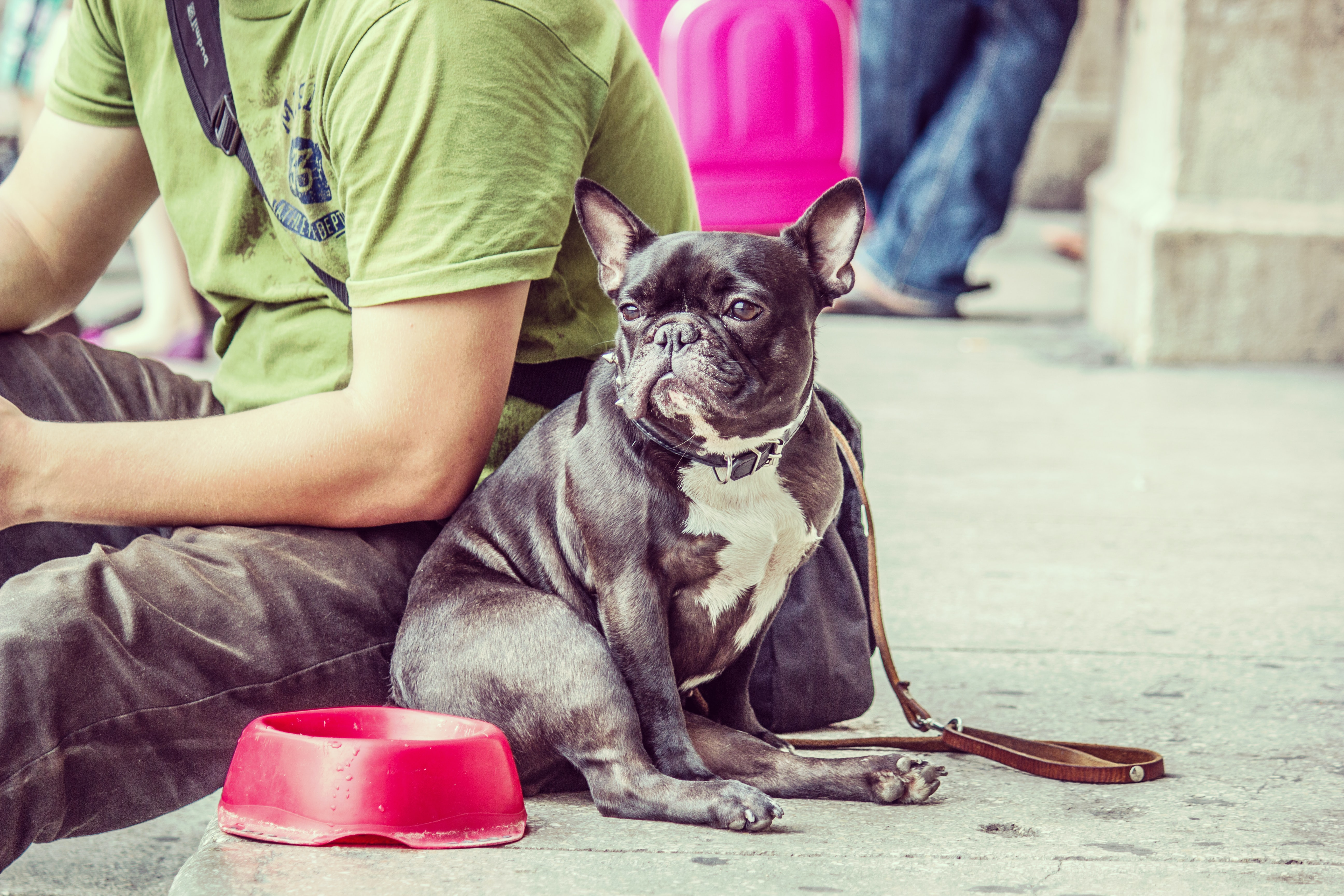 person sitting beside short-coated black puppy