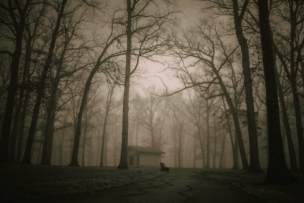 silhouette photography of house surrounded by withered trees