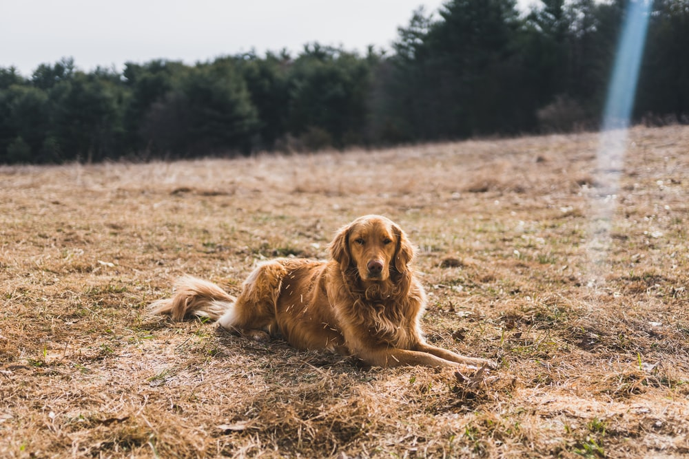 short-coated brown dog leaning on ground near green leaf trees under cloudy sky at daytime