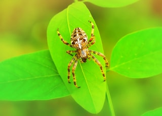selective focus photo of brown and white spider on green leaf during daytime