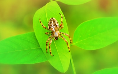 selective focus photo of brown and white spider on green leaf during daytime spider zoom background