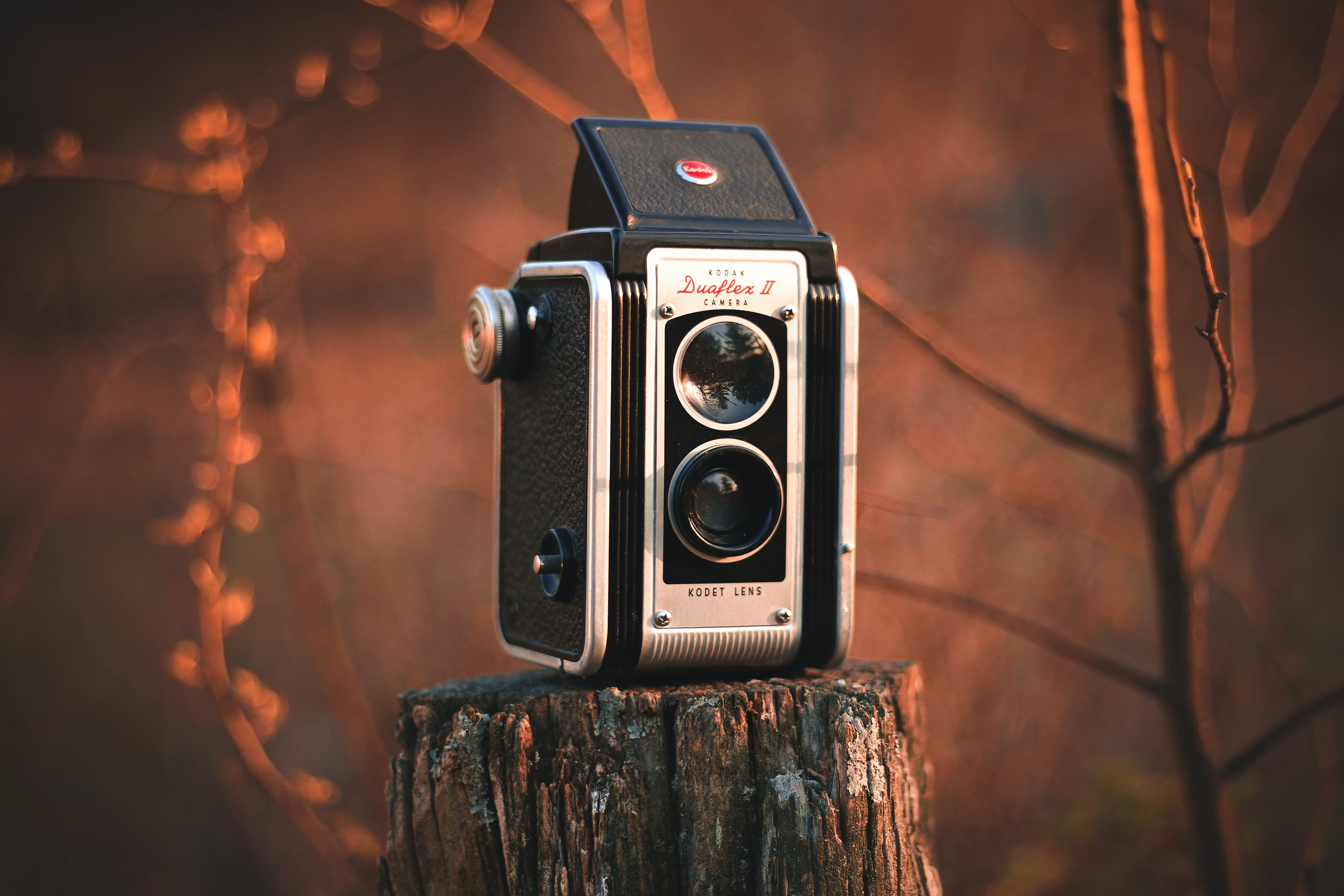 gray and black folding camera on brown tree stamp