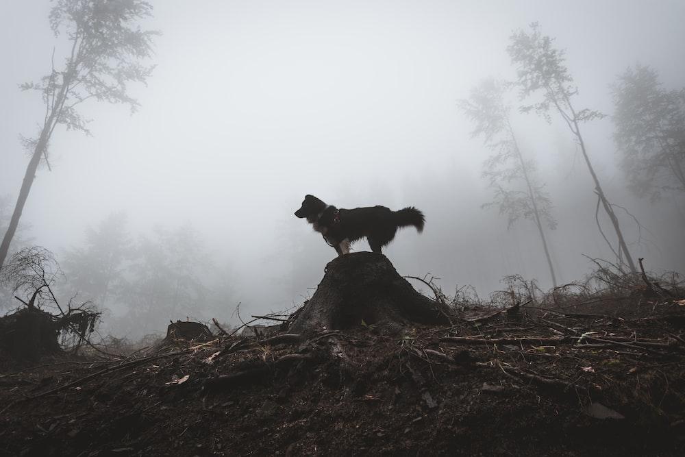 black dog standing on rock \