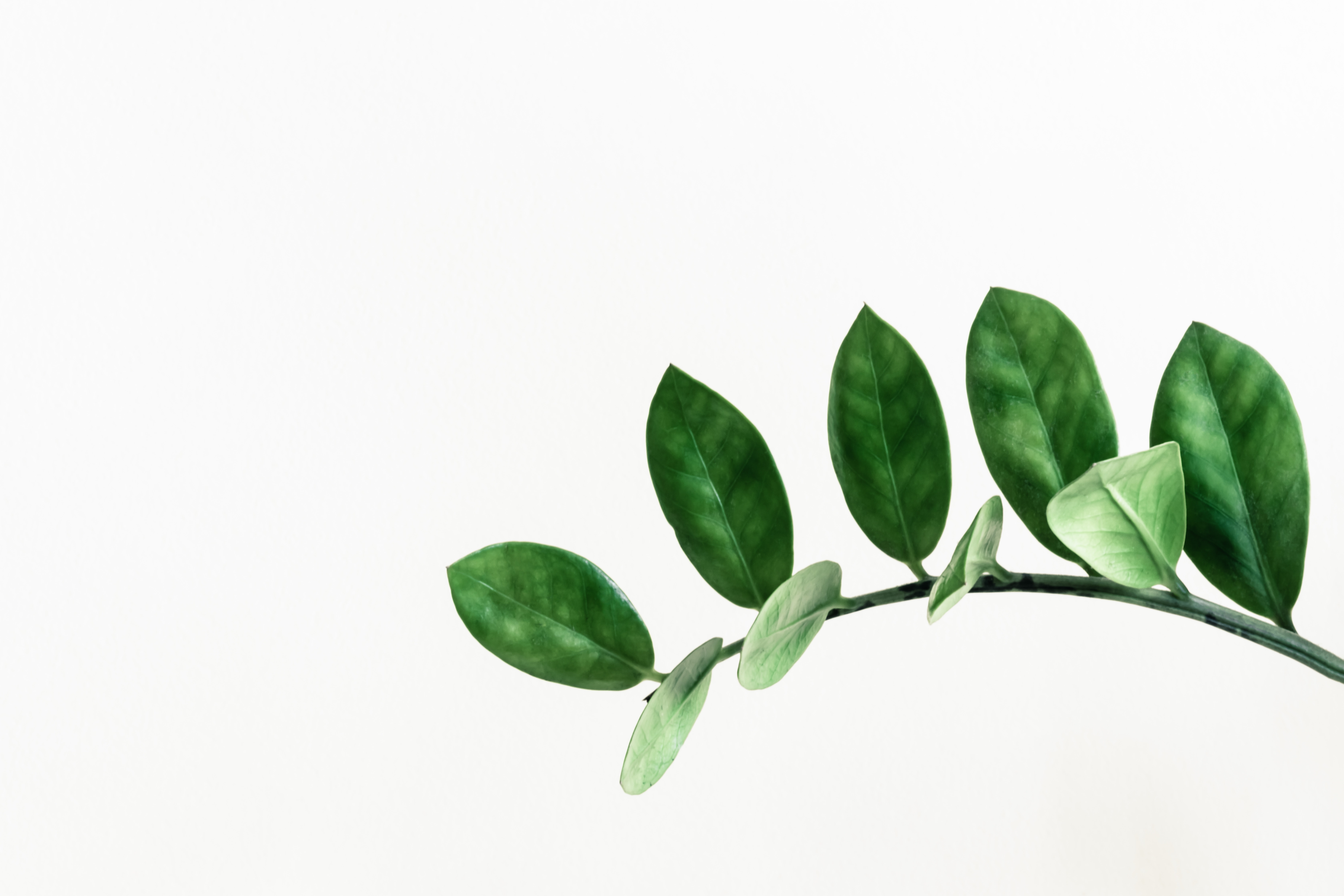 green leafed plant clip art