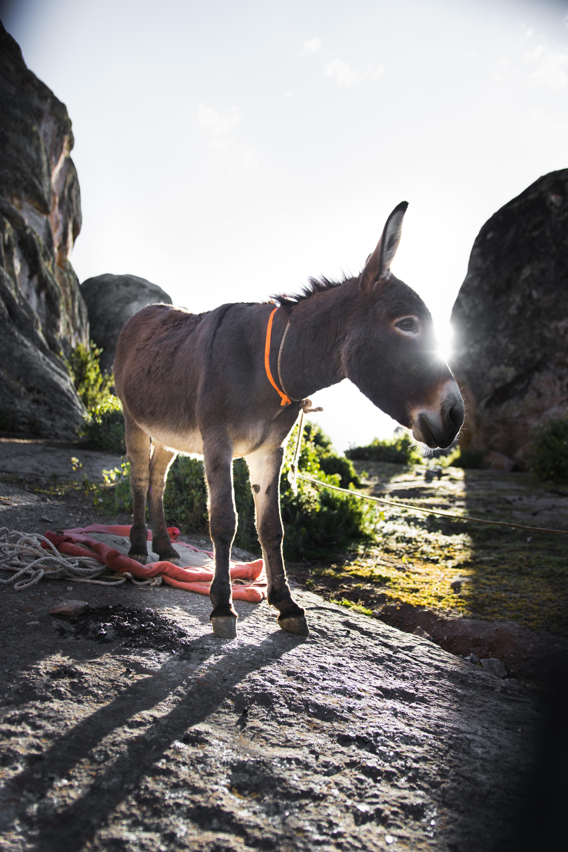brown donkey standing beside green bush at daytime