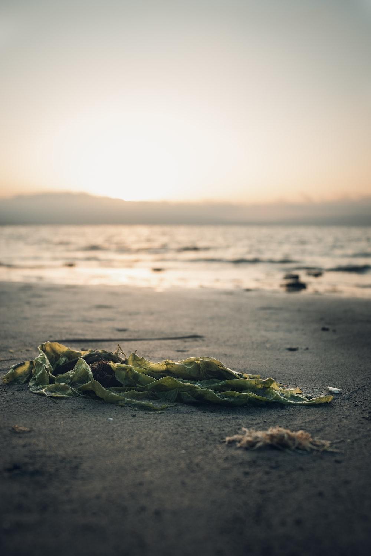 leaves on sand