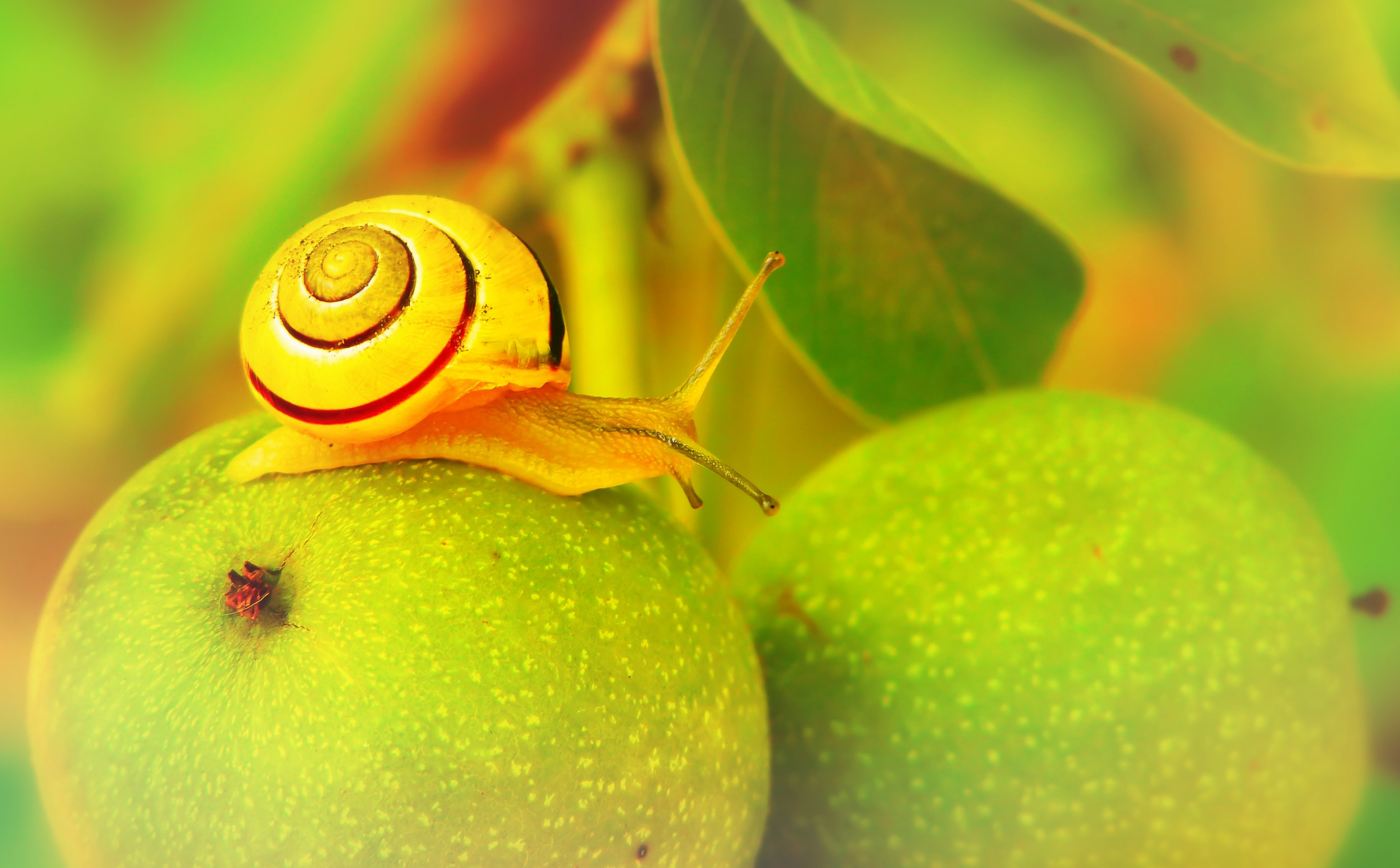 brown snail on green fruits
