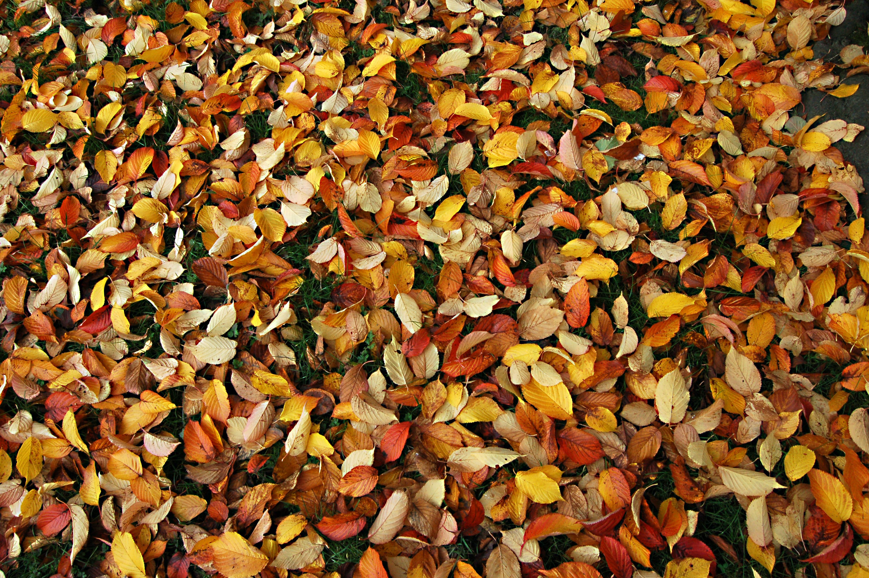 yellow and red leaves on grass field