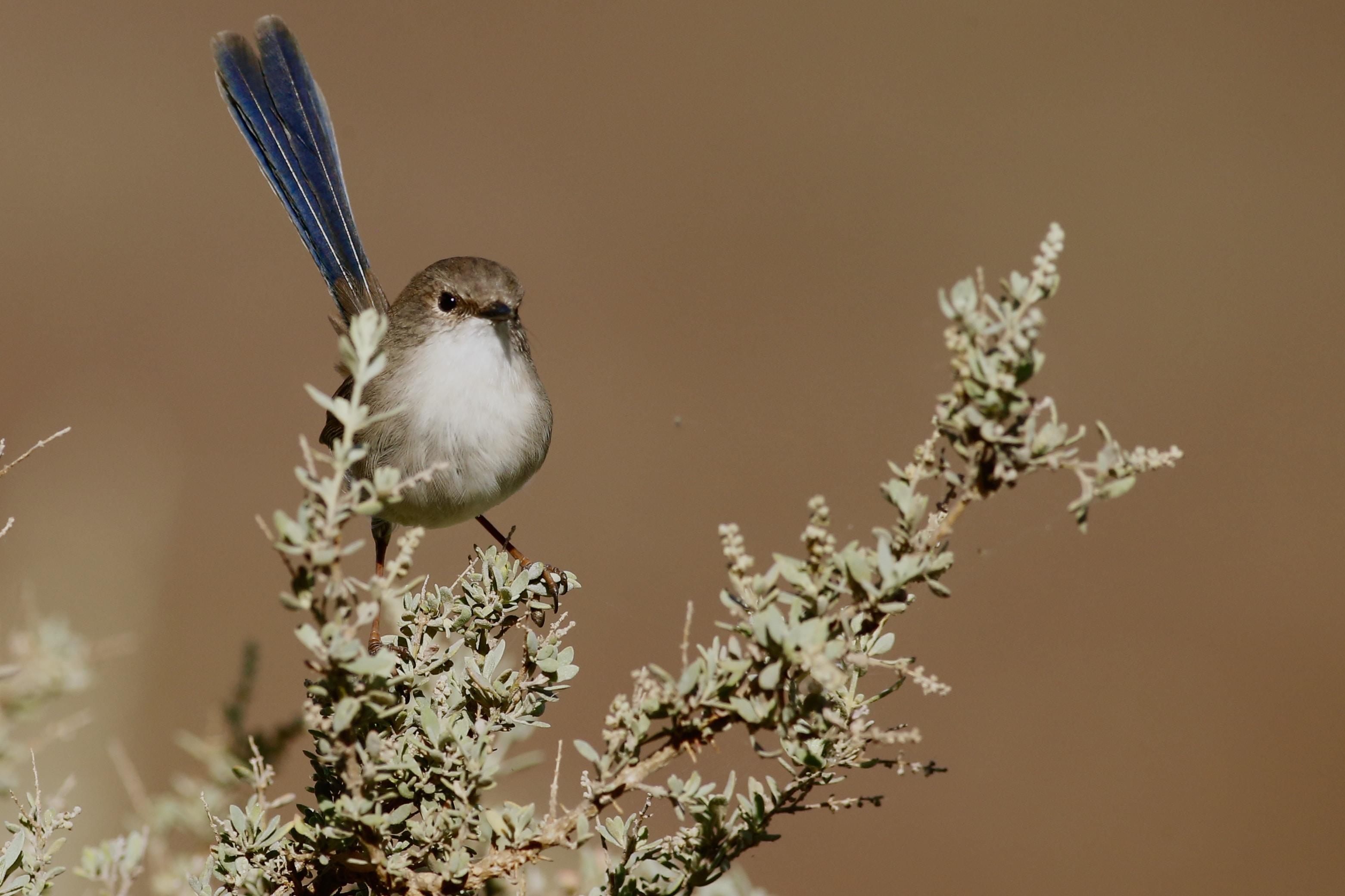 close up photography of brown bird
