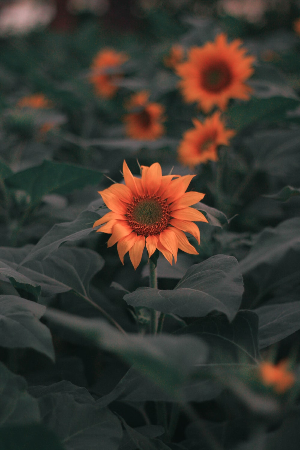 orange flowers and green leaves