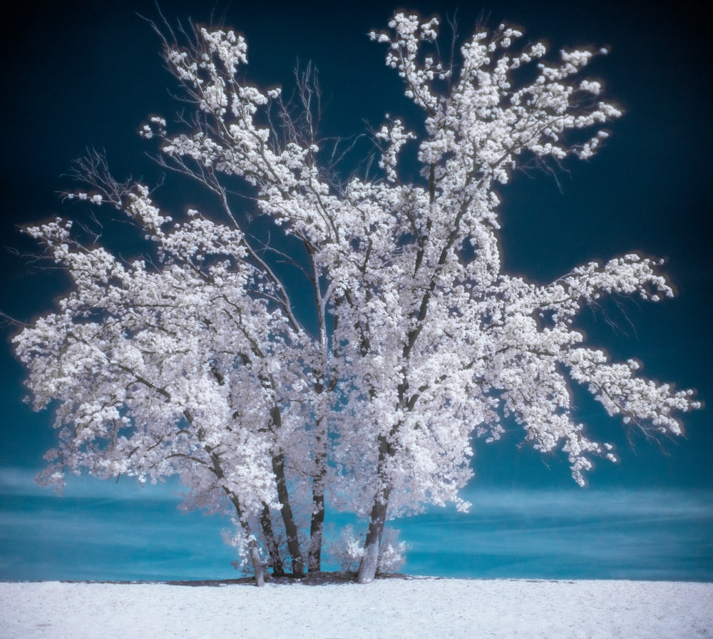 photography of snow coated tree