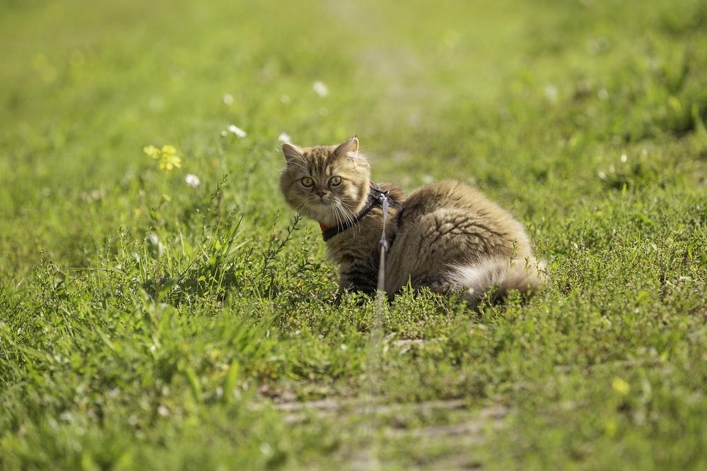 orange cat on green grass field closeup photo